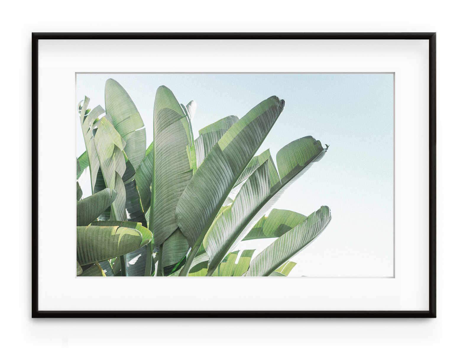 Tablou Banana Leaves II Aluminium Noir la pret 387 lei