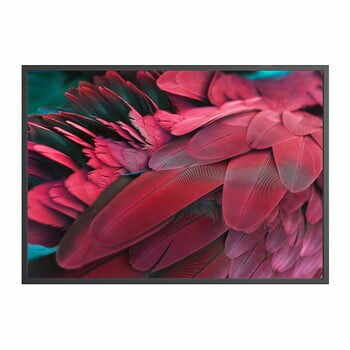 Poster DecoKing Feathers Red, 100 x 70 cm