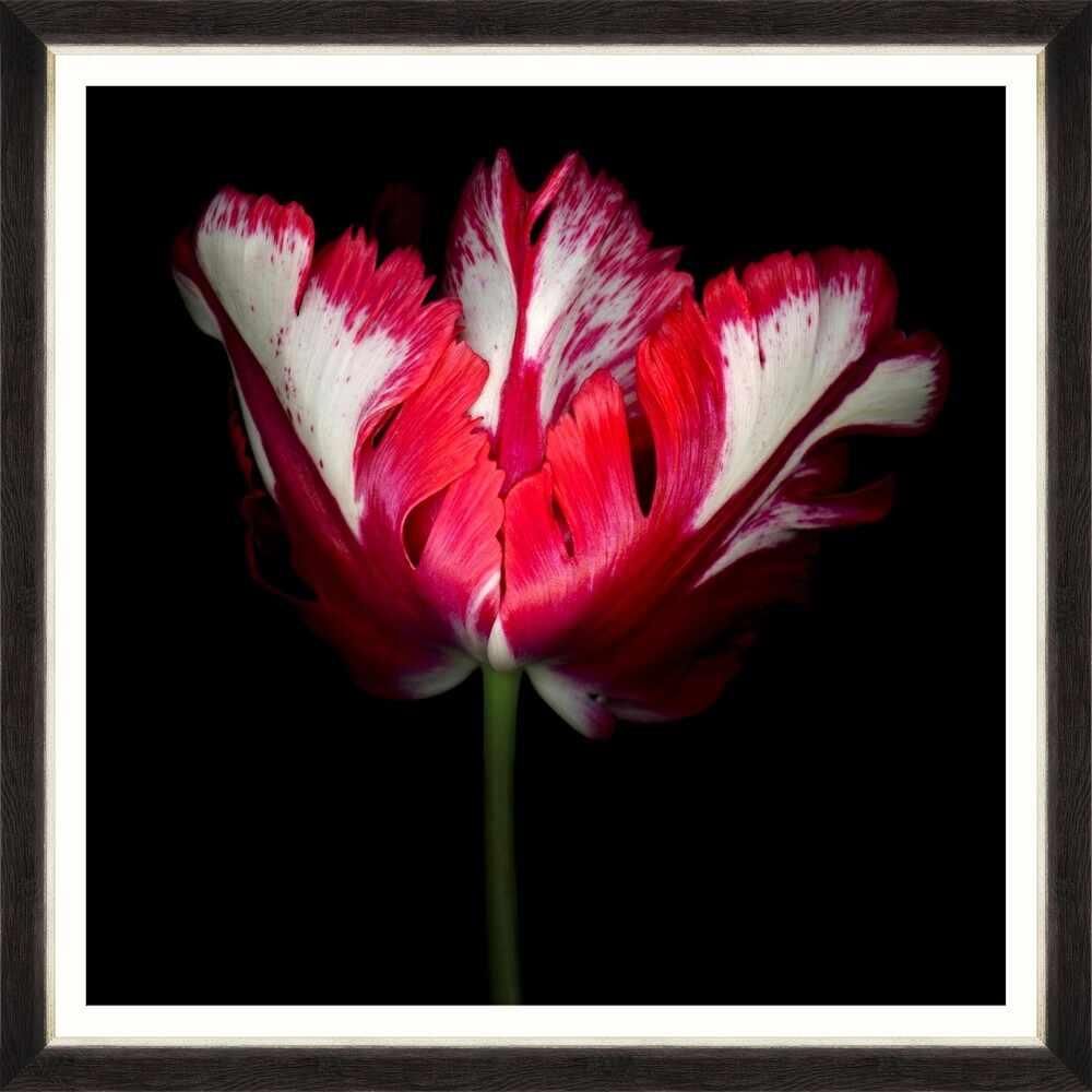 Tablou Framed Art Beautiful Tulip II la pret 436 lei