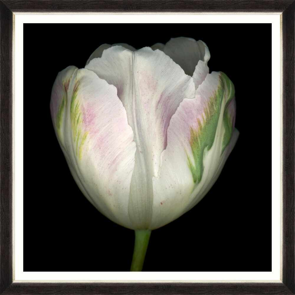 Tablou Framed Art Beautiful Tulip IV la pret 436 lei