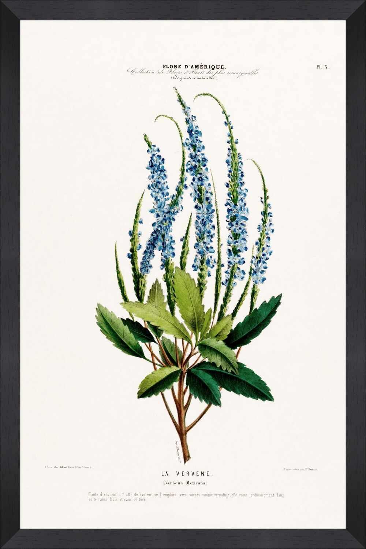 Tablou Framed Art Flore Amerique IX la pret 251 lei
