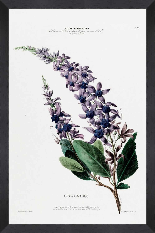 Tablou Framed Art Flore Amerique V la pret 397 lei