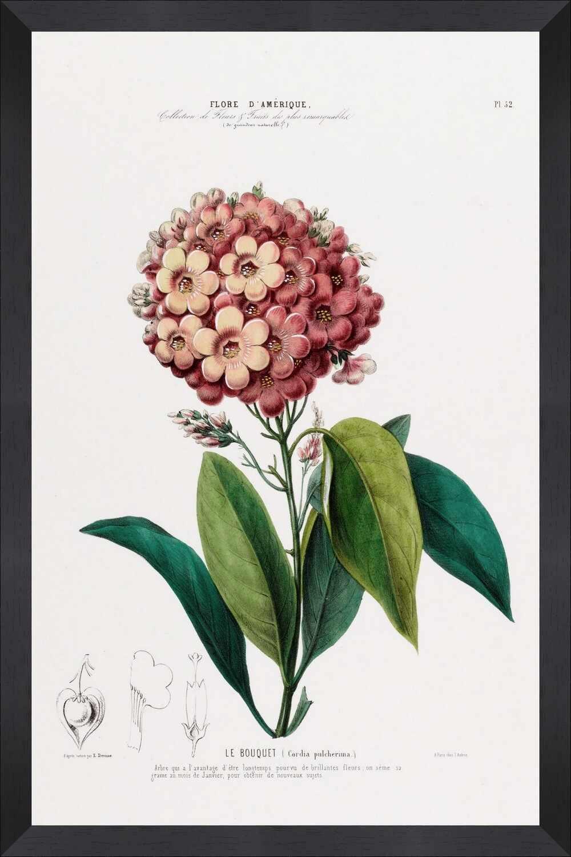 Tablou Framed Art Flore Amerique VIII la pret 397 lei