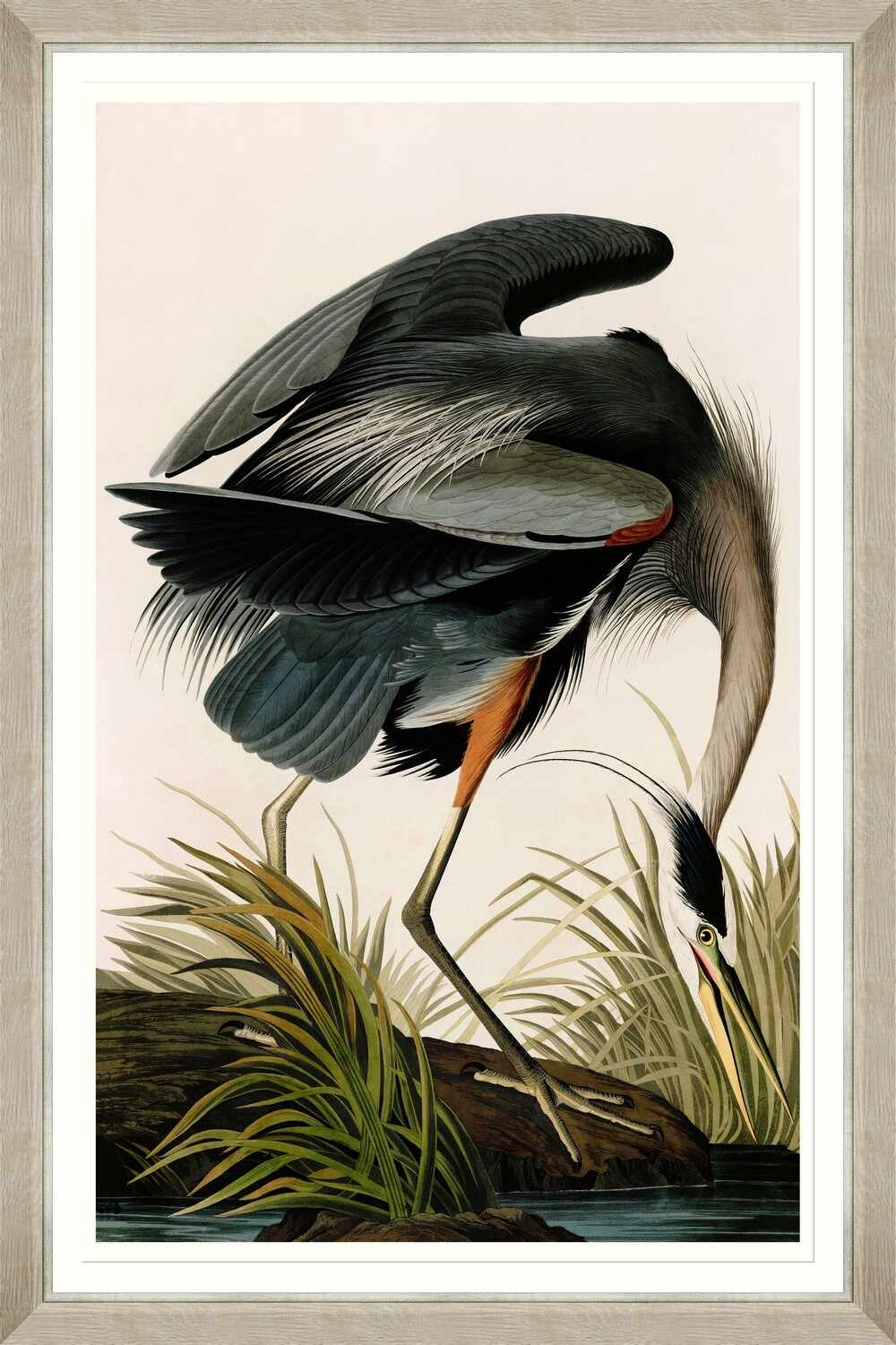 Tablou Framed Art Great Blue Heron By Audubon
