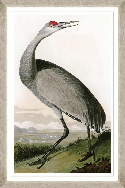 Tablou Framed Art Hooping Crane II By Audubon la pret 395 lei
