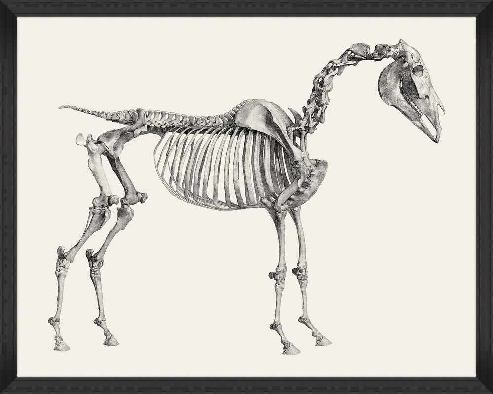 Tablou Framed Art Horse Anatomy