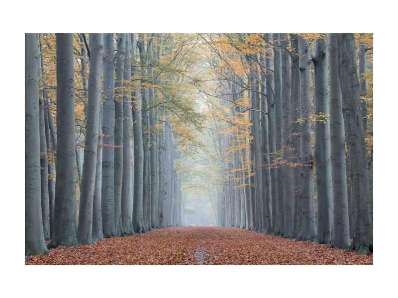 Tablou Sticla Trees II, 120 x 80 cm la pret 486 lei