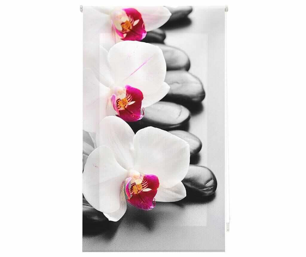 Jaluzea tip rulou Orchid 100x180 cm la pret 179.99 lei