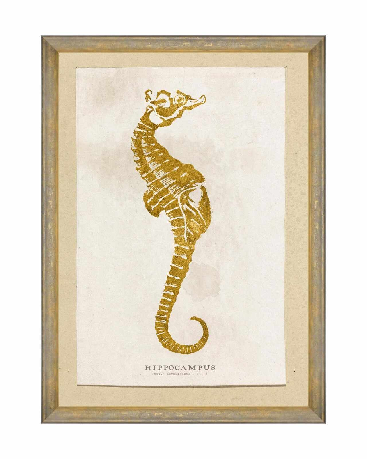 Tablou Framed Art Caribbean Sea Life - Hippocampus, 50 x 70 cm