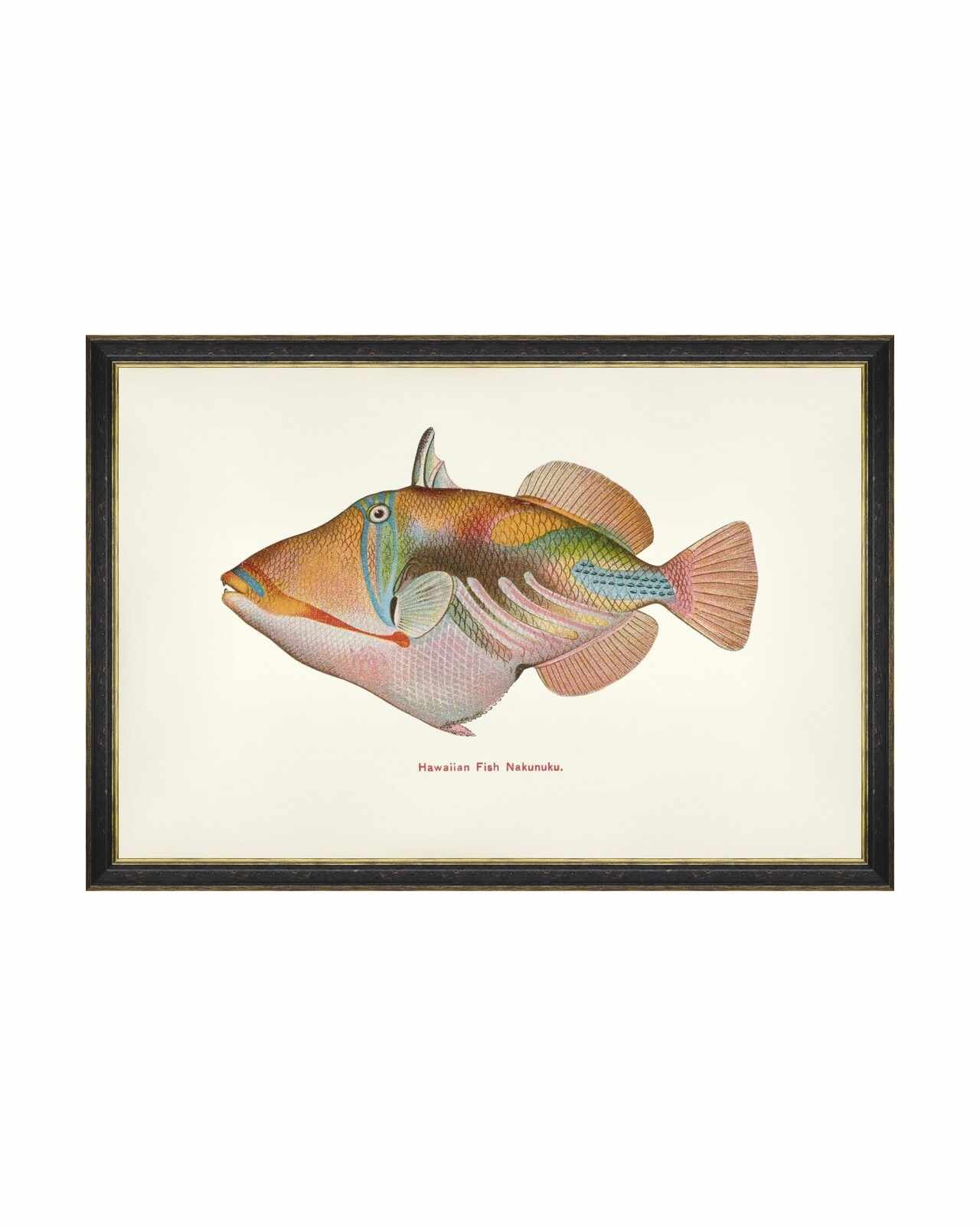 Tablou Framed Art Fishes Of Hawaii - Nakunuku Fish, 60 x 40 cm