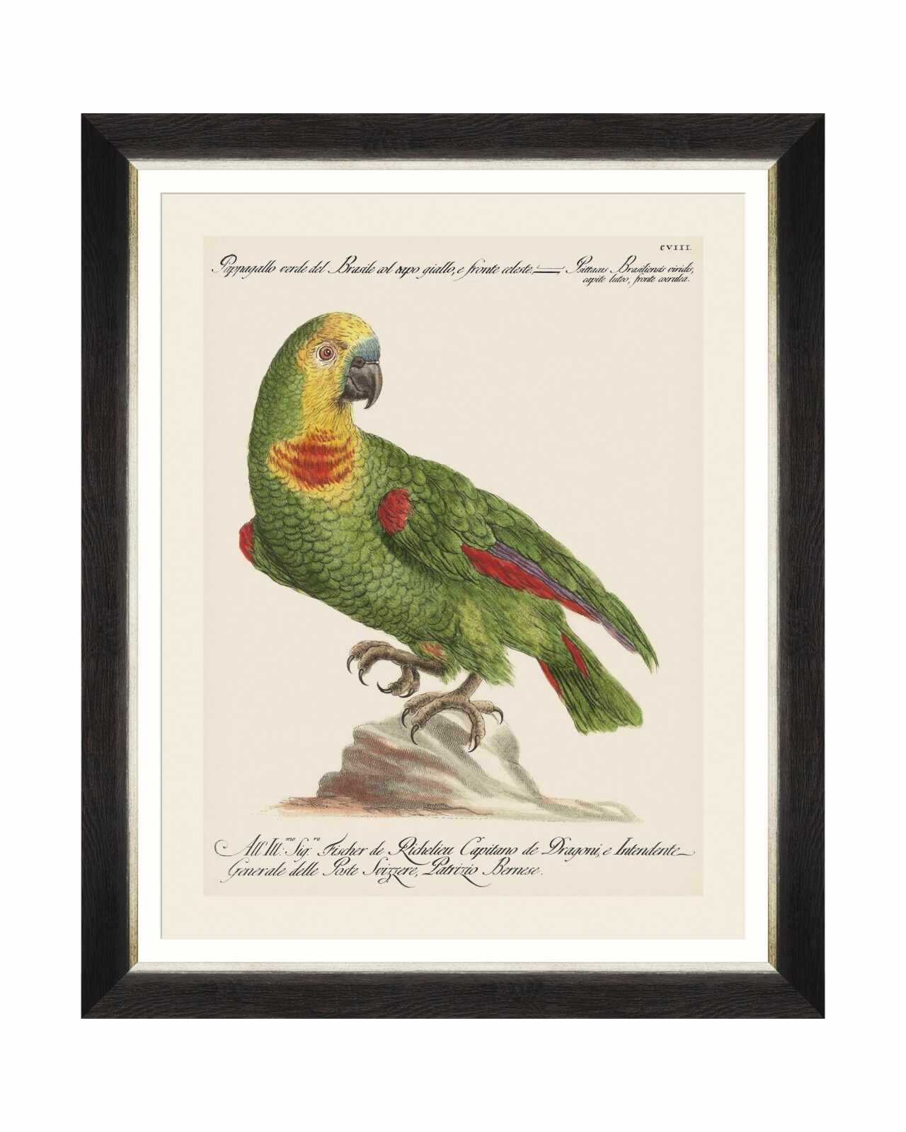 Tablou Framed Art Parrots Of Brasil II, 40 x 50 cm
