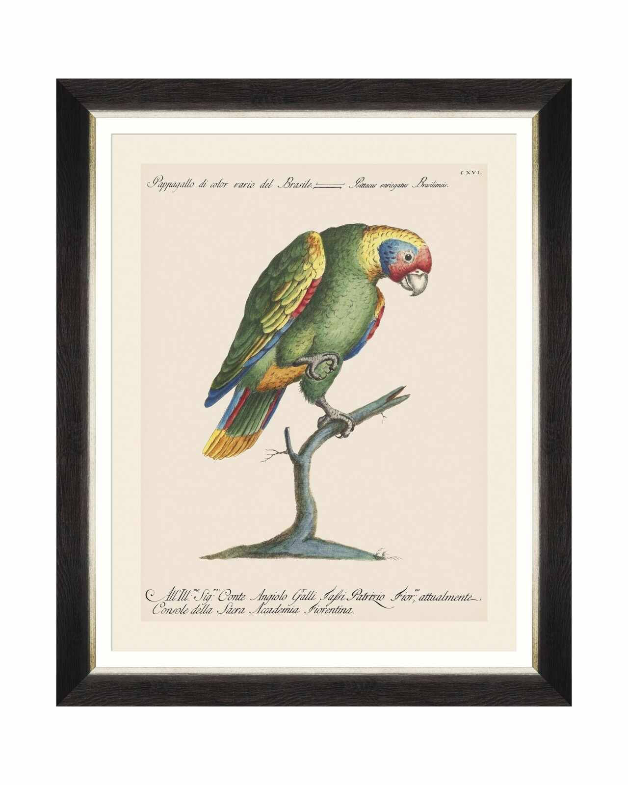 Tablou Framed Art Parrots Of Brasil IX, 40 x 50 cm