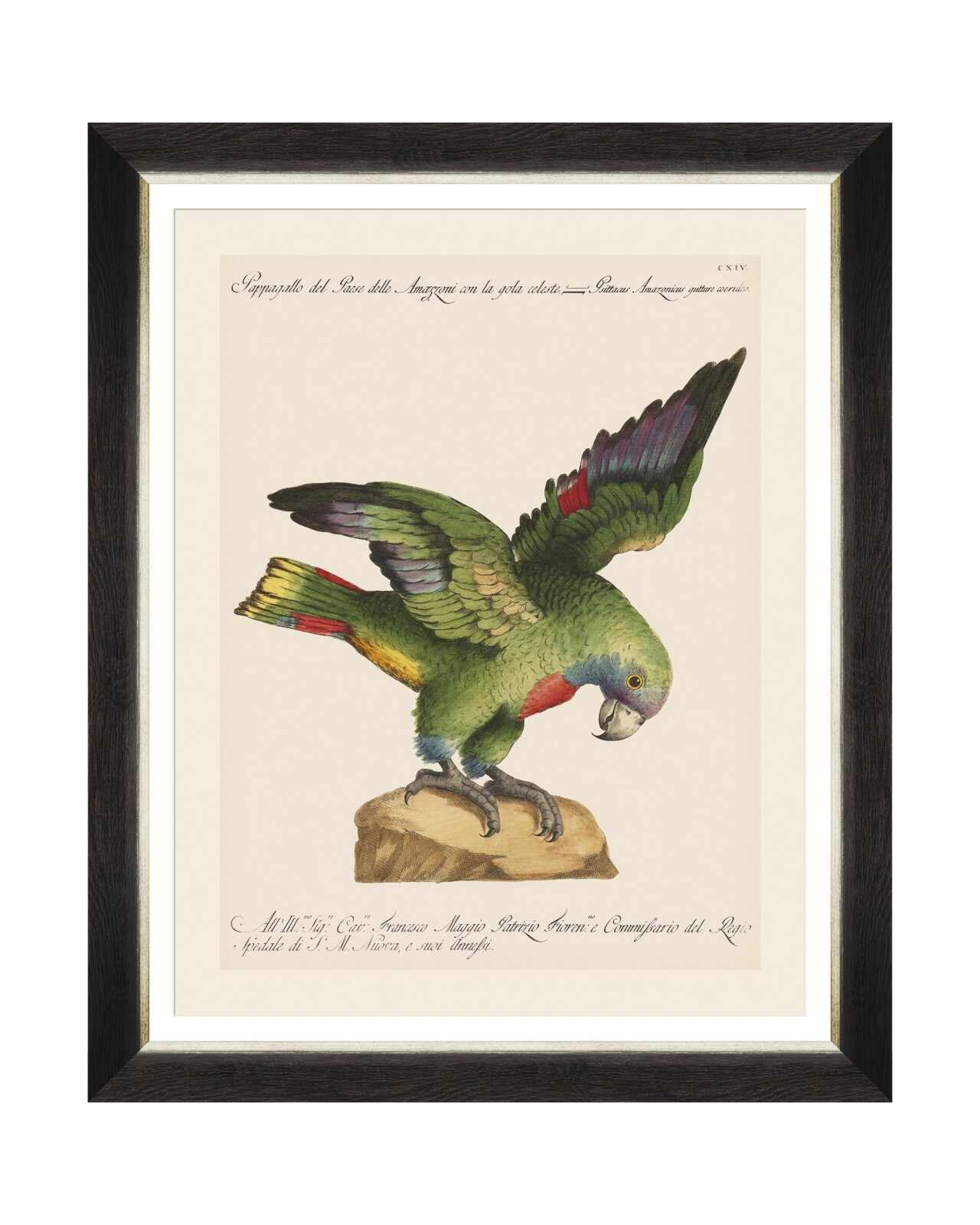 Tablou Framed Art Parrots Of Brasil XII, 40 x 50 cm