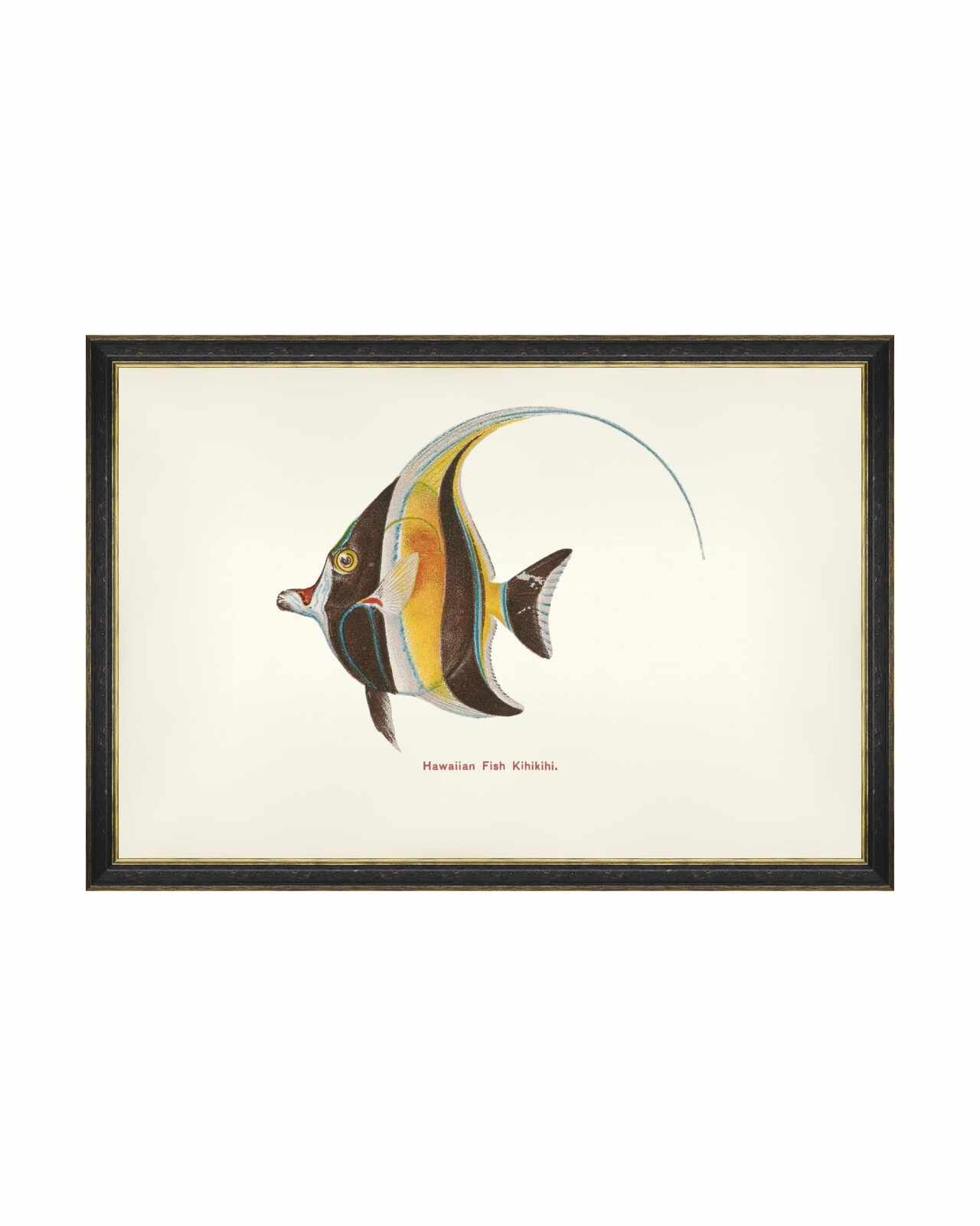 Tablou Framed Art Fishes Of Hawaii - Kihikihi Fish, 60 x 40 cm