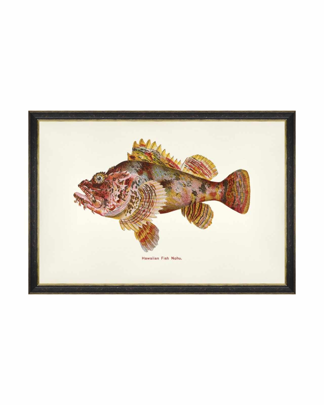 Tablou Framed Art Fishes Of Hawaii - Nohu Fish, 60 x 40 cm