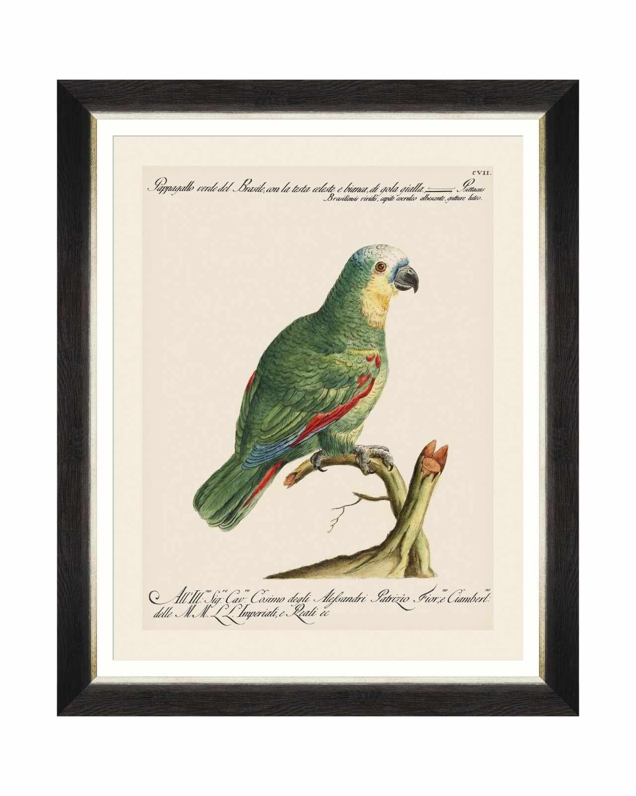 Tablou Framed Art Parrots Of Brasil I, 40 x 50 cm