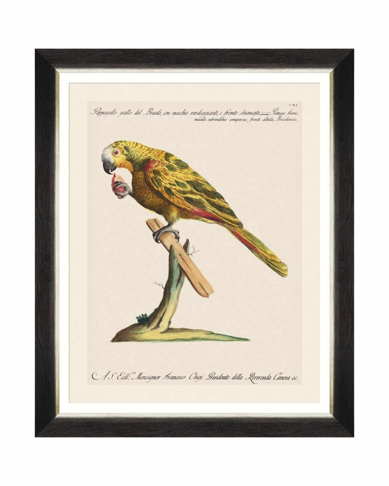 Tablou Framed Art Parrots Of Brasil IV, 40 x 50 cm