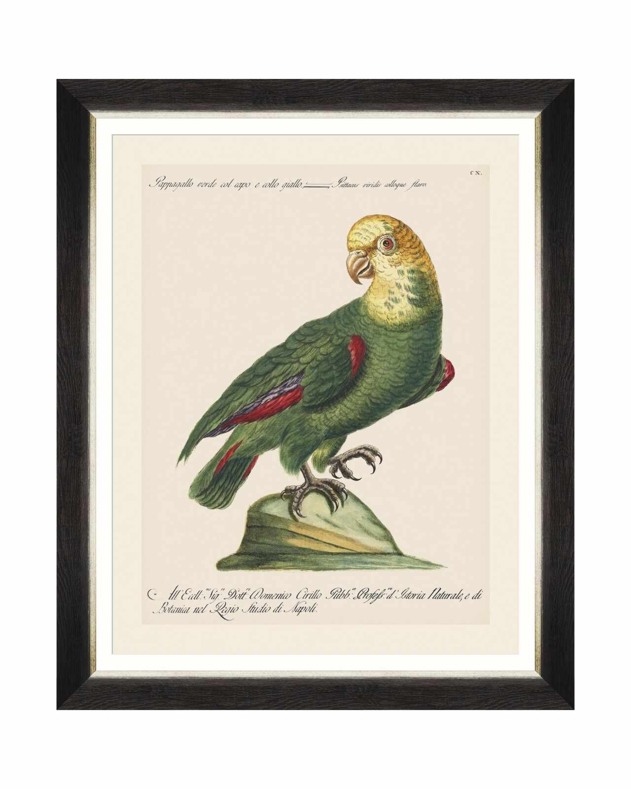 Tablou Framed Art Parrots Of Brasil V, 40 x 50 cm