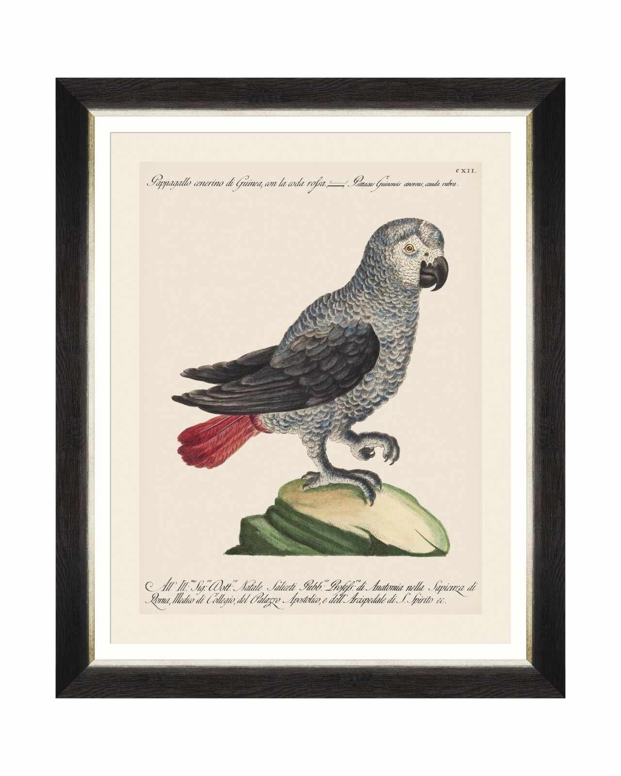 Tablou Framed Art Parrots Of Brasil VI, 40 x 50 cm