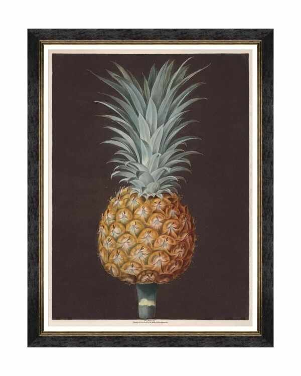 Tablou Framed Art Pineapples Of Antigua - The Antigua Pine By Brookshaw, 60 x 80 cm