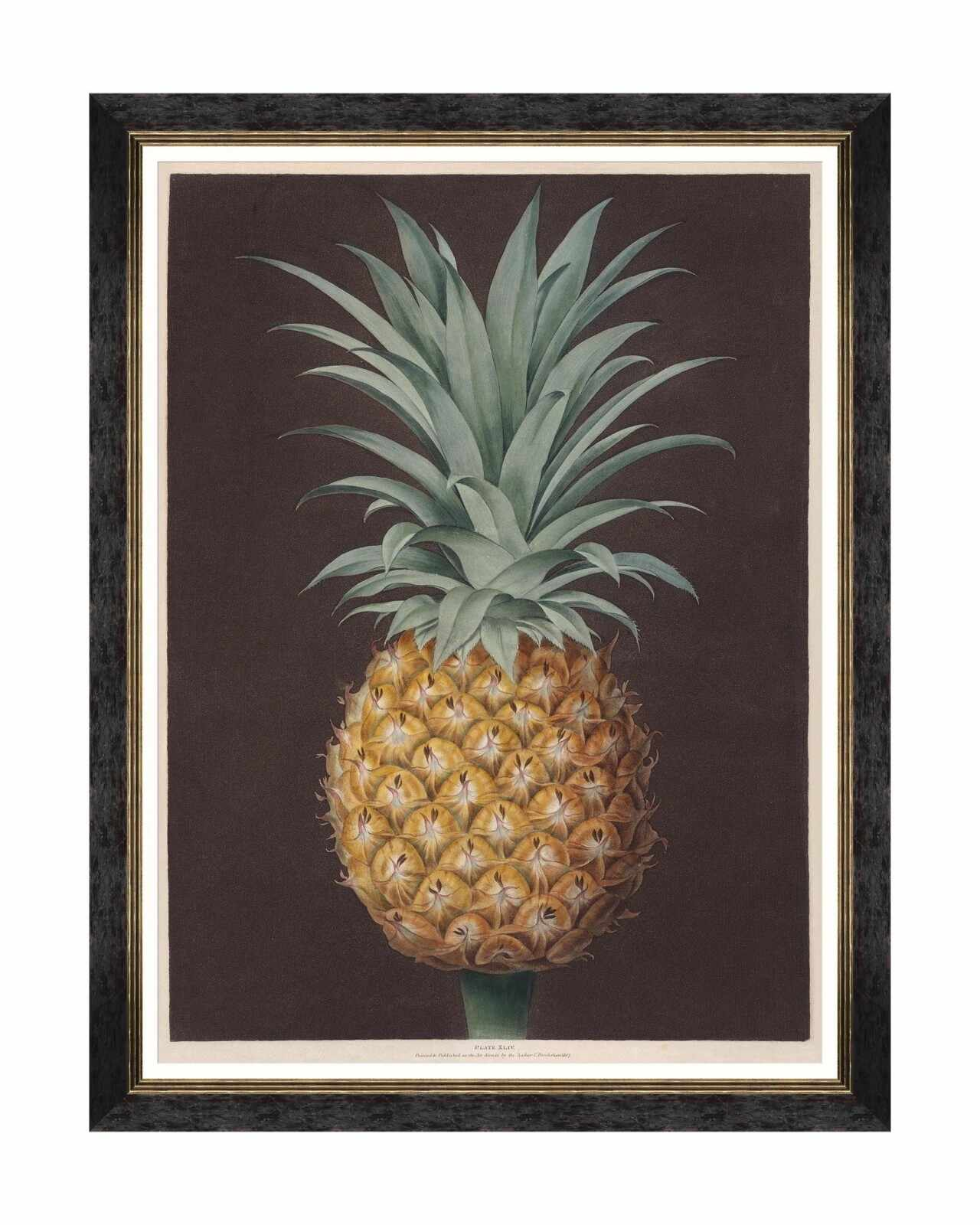 Tablou Framed Art Pineapples Of Antigua - The Havannah Pine By Brookshaw, 60 x 80 cm