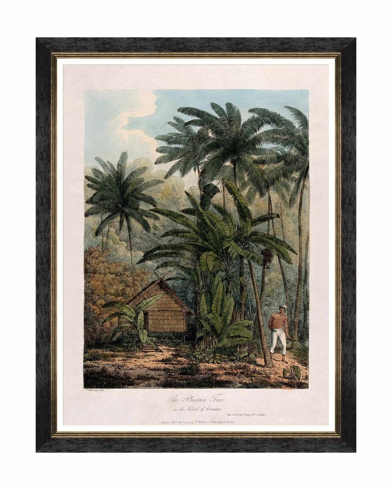 Tablou Framed Art Trees Of Krakatoa - The Plantain Tree, 60 x 80 cm
