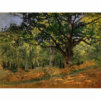 Reproducere tablou Claude Monet - The Bodmer Oak, Fontainebleau Forest, 70x50 cm la pret 167 lei