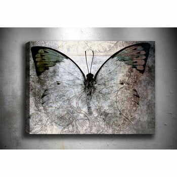 Tablou Tablo Center Fading Butterfly, 70 x 50 cm